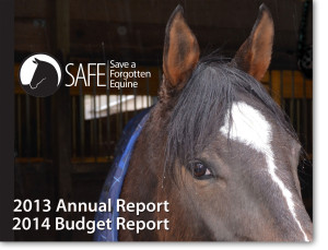 2013-Annual-Report-image