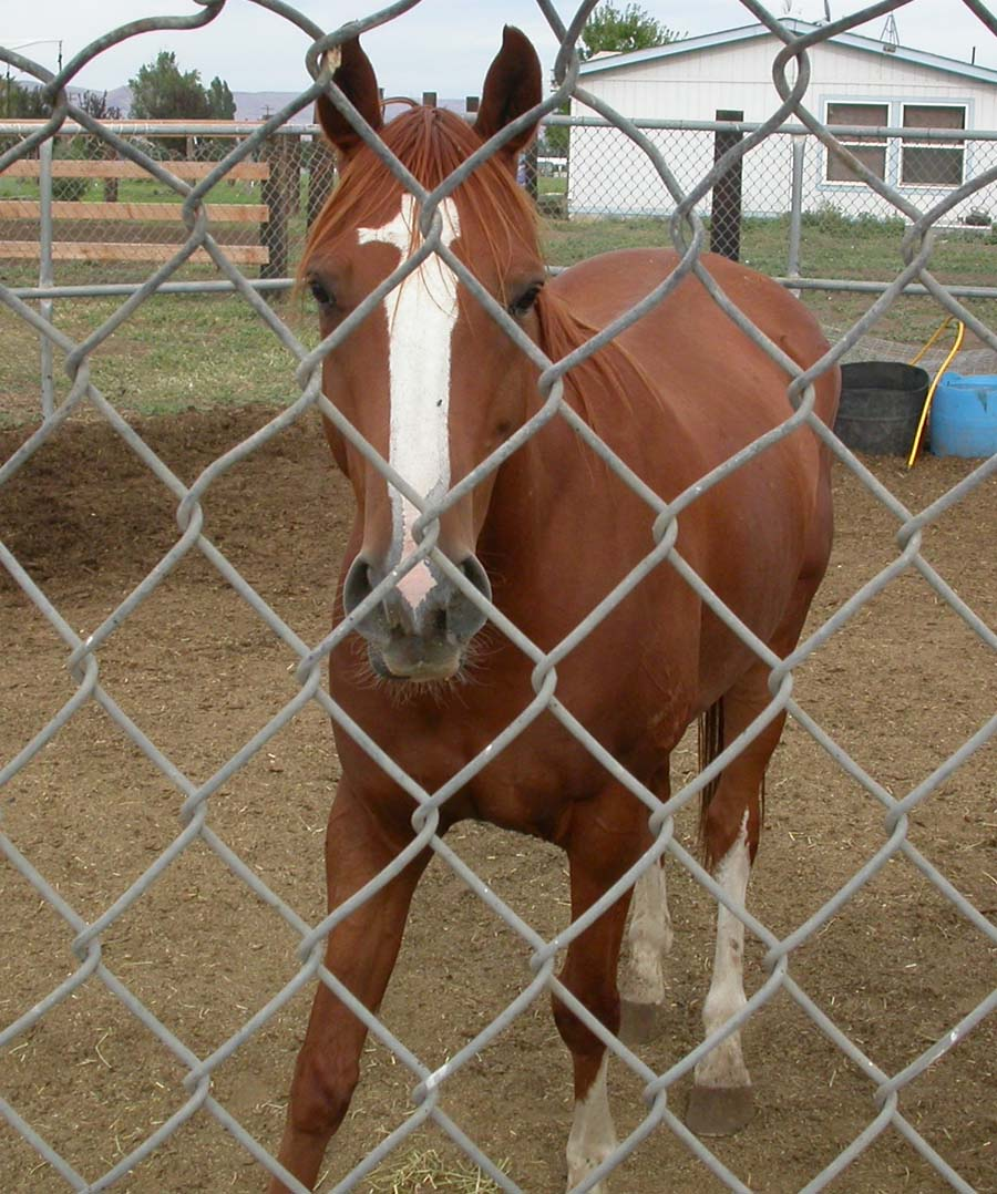 Honeycutt in 2005, shortly after his rescue from the feedlot