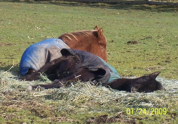 Lola & Aiden napping in the hay