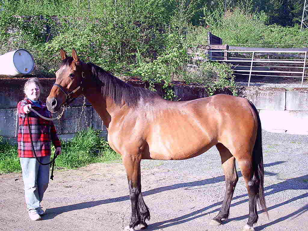 rescue stories save a forgotten equine safe