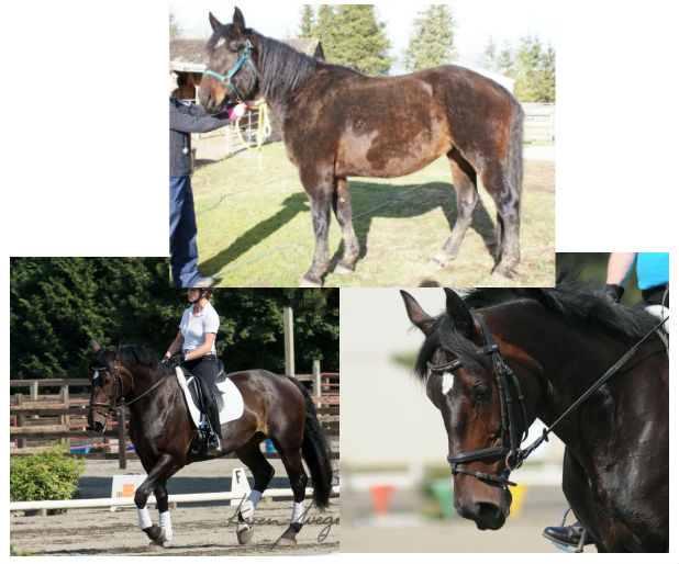 SAFE In The News Save A Forgotten Equine SAFE - Before and after achorse stable