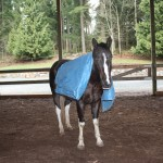 Dexter goes for a stroll with his new friend, Mr. Blue Tarp