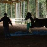 Dexter meets the horse-eating blue tarp.