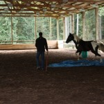 Dexter trotting over the blue tarp with confidence!