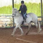 Char under saddle