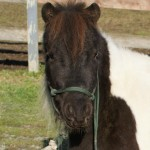 Jazzy, 4 year old mare