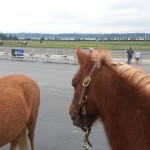 Sunny was fascinated by the race horses!