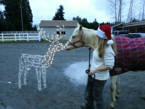 Curious Jewel sniffs noses with a reindeer-brave little girl!