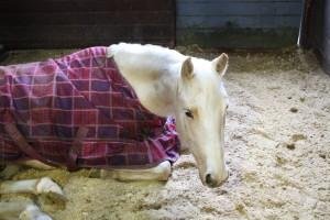 Jewel takes a healing nap
