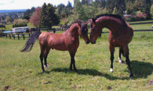 Oscar's first friend as a gelding was Faerplay