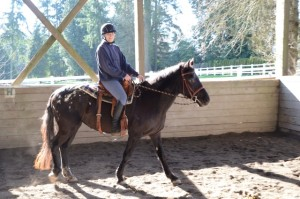 Misty (with volunteer rider Sara E in the saddle)