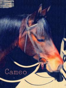 cameo_04_16_2015