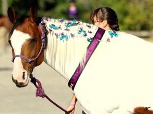 Nala at the SAFE Benefit Horse Show