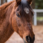 Oscar: A Perfect Gelding…A Perfect Gentleman