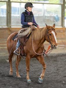 Safe Options For Rehoming Your Horse Save A Forgotten Equine Safe