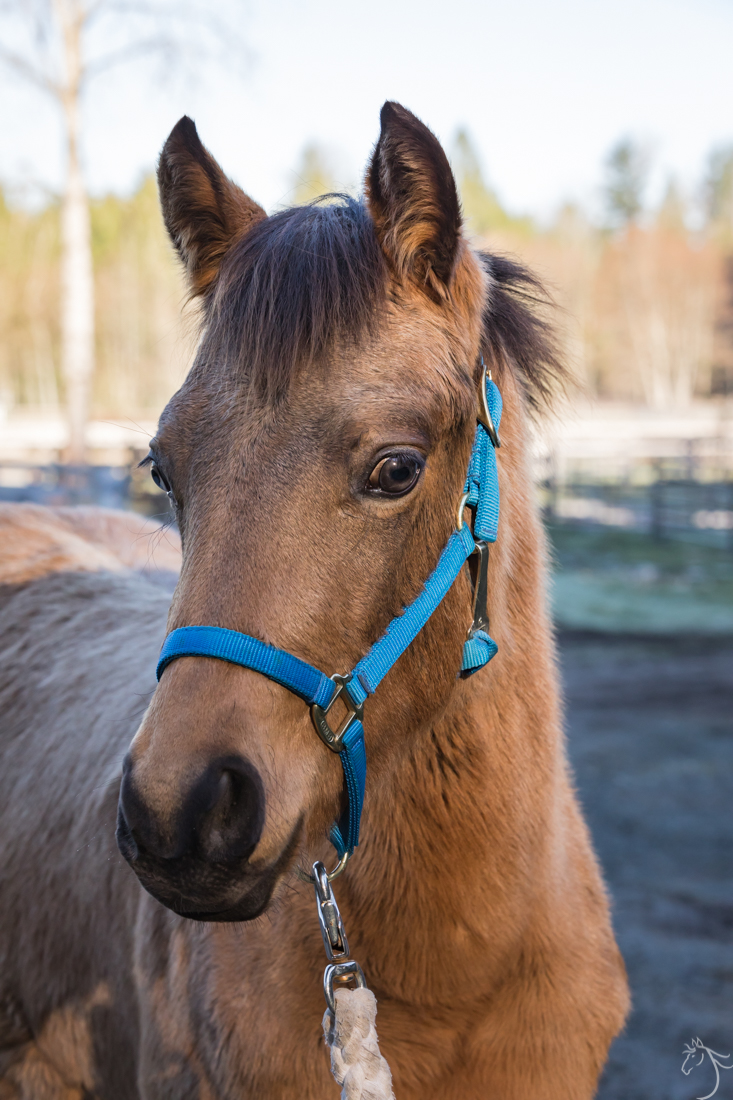Zo 235 Save A Forgotten Equine Safe
