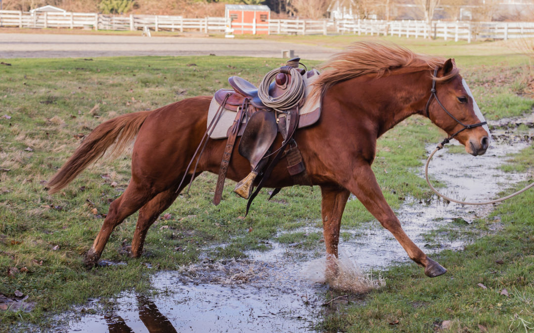 Valor is a Riding Horse!