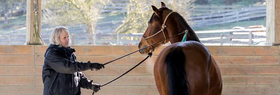 Mason: Horsemanship Clinic Report