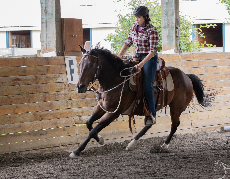 Roscoe: Horsemanship Clinic Report