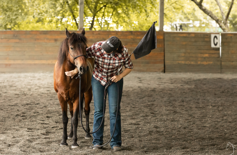 Sage | Save a Forgotten Equine (SAFE)