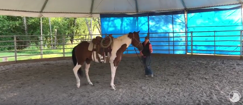 Video: Tabitha's First Saddling at SAFE