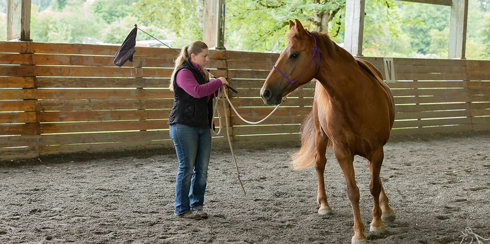 Sienna: Horsemanship Clinic Report