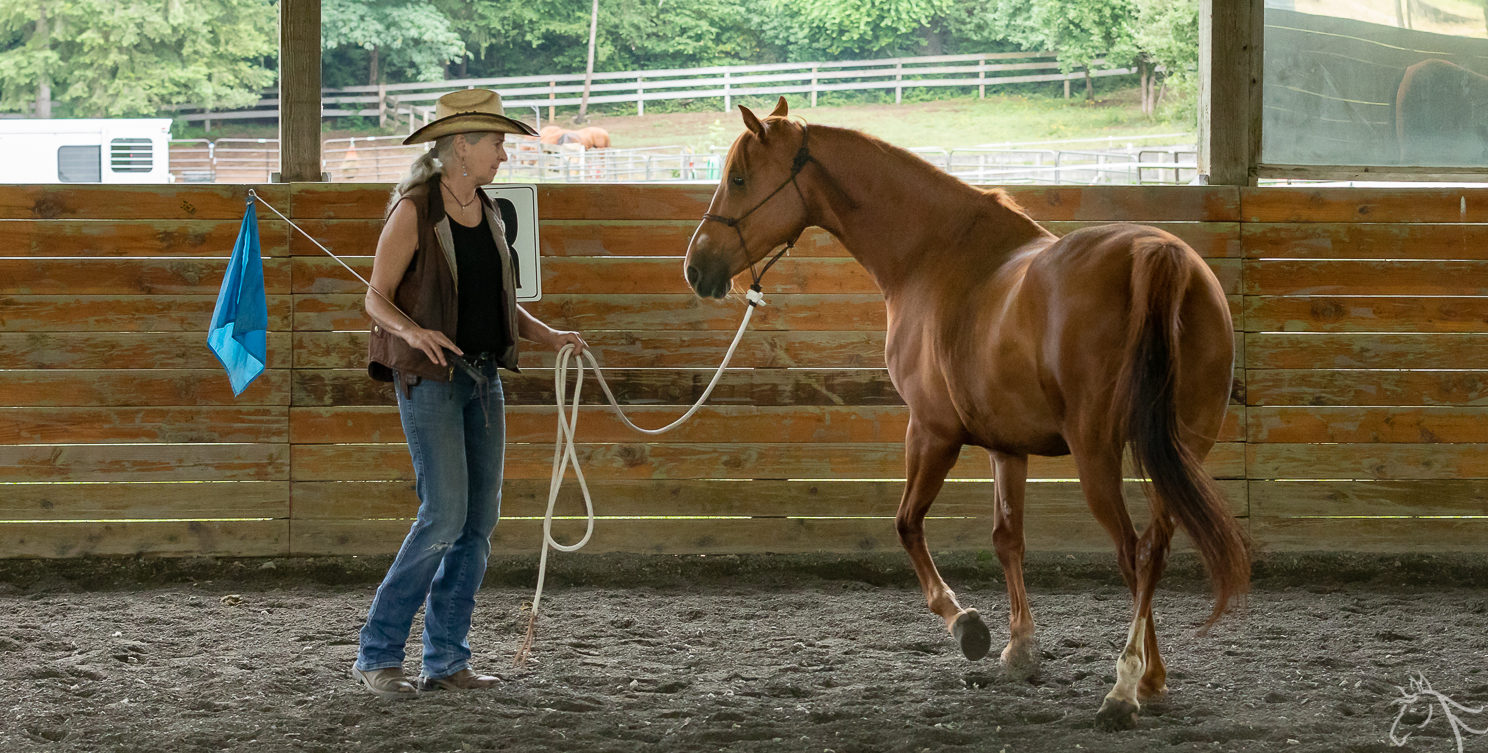 Teddi: Horsemanship Clinic Report
