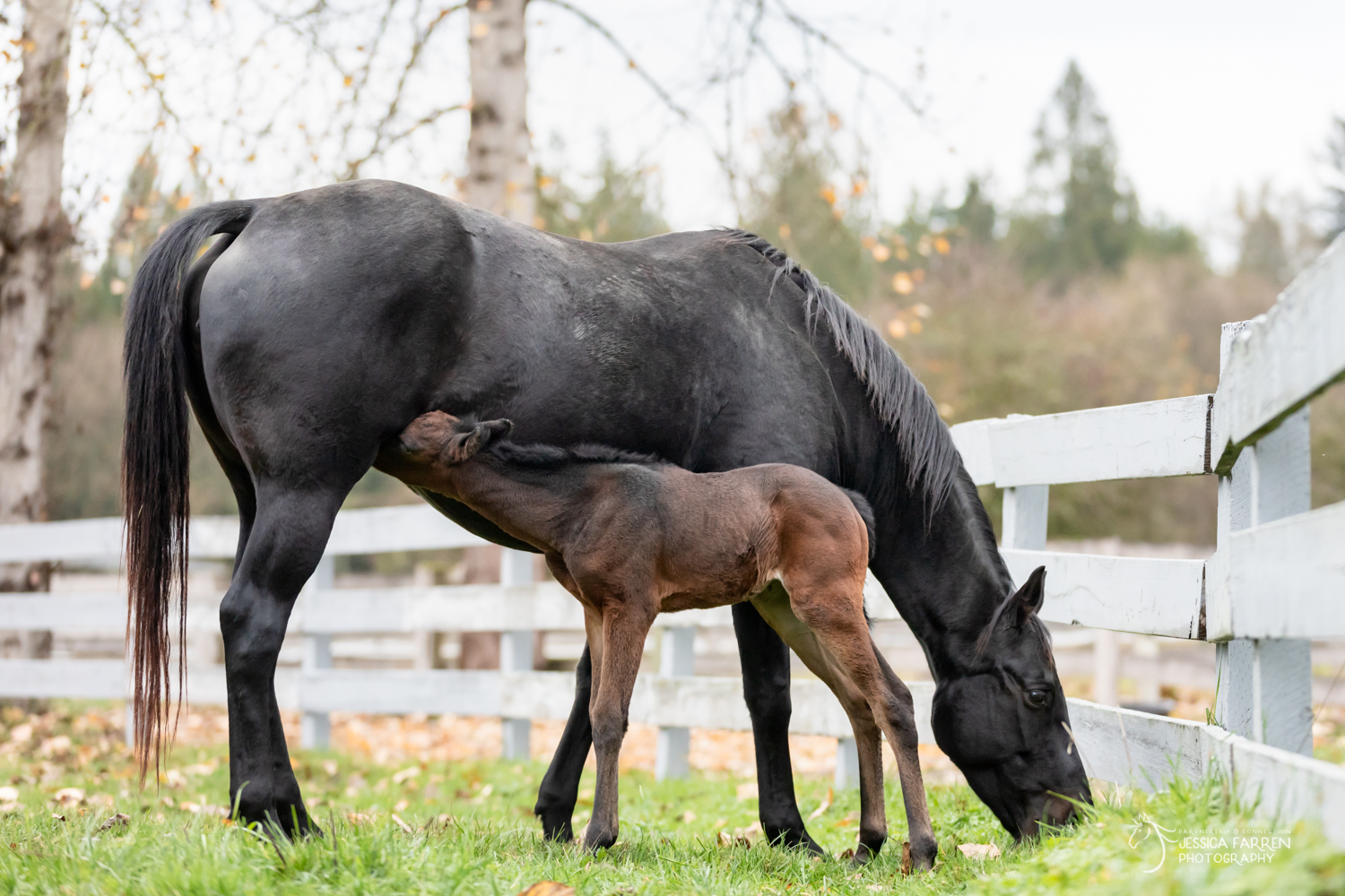 Why are there foals at SAFE?