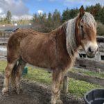 New Horses at SAFE