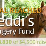 Teddi's Surgery Fund