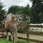 Big Horse, Big Hoof: Slim's Foot Problems