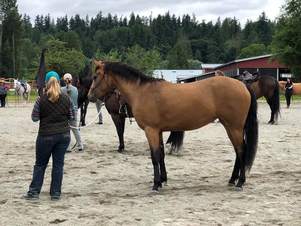 Piper | Save a Forgotten Equine (SAFE)