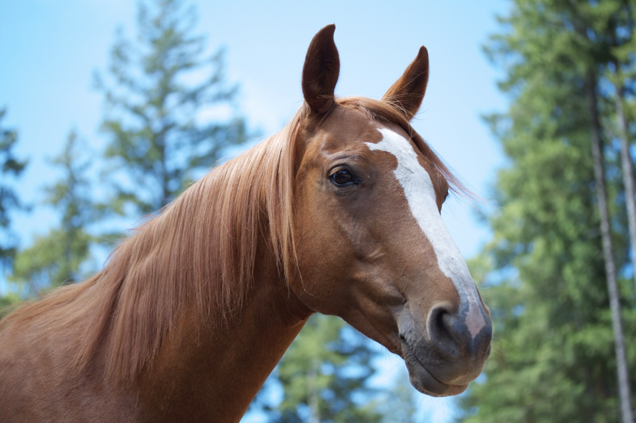 A Great Horse HasGone