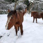 Fall City 40 Horses Update