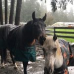 An Unlikely Pair Finds a Forever Home