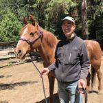 The Power of Positive Energy on Horses, by Marty Abdo