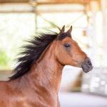 Alder on The Limelight Pet Project