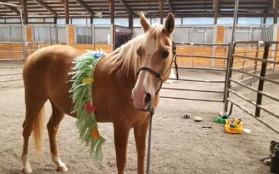 Looking for a Kids' Horse? Look no further!