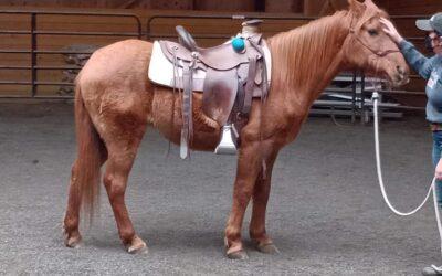 Beauty Under Saddle?