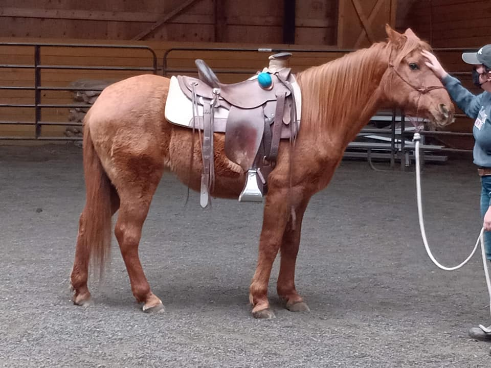Beauty Under Saddle?