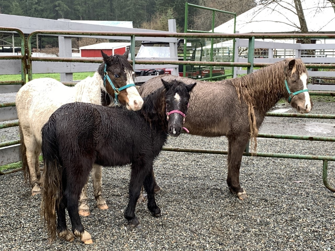 Four new faces (or 16 new hooves) atSAFE