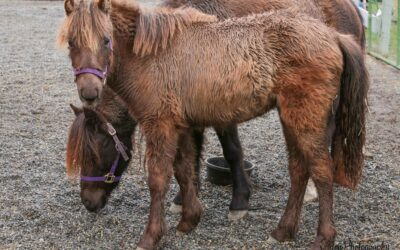 Four (more) new ponies atSAFE