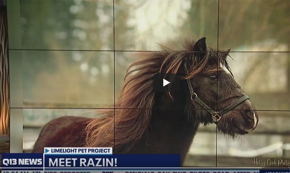 Q13 Pet of the Week:Razin