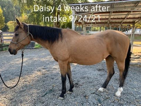 Daisy on the Upswing